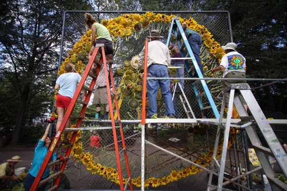 Labor Day Sunflower Project opens Knoxville's Krutch Park